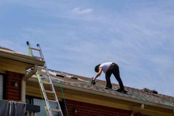 Mold spores can easily become airborne jumping from roof to roof